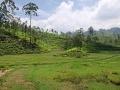 Cesta na Srí Lanku