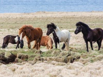 Islandská pohlednice