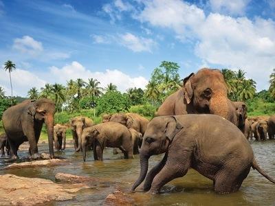 Perly Srí Lanky